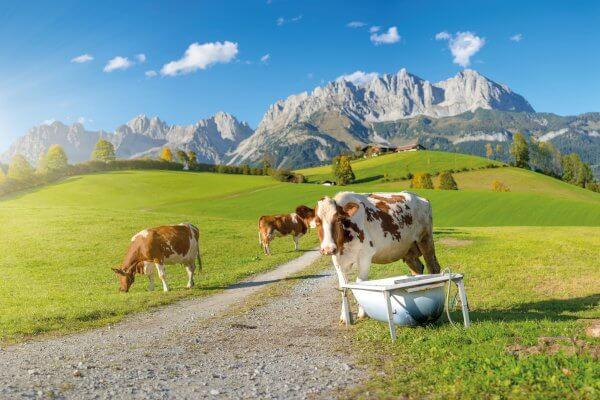 Reith bei Kitzbühel, Tirol